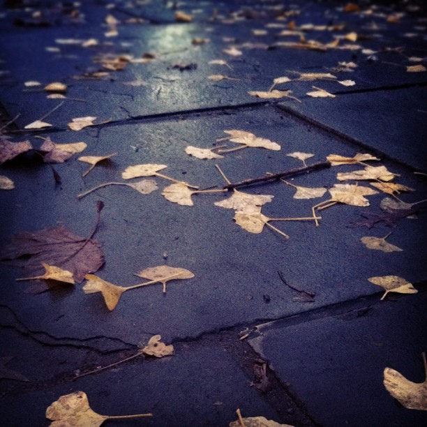 tripping on autumn leaves